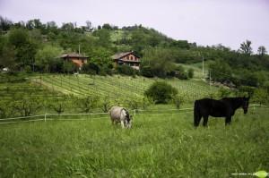 fattoria quercia